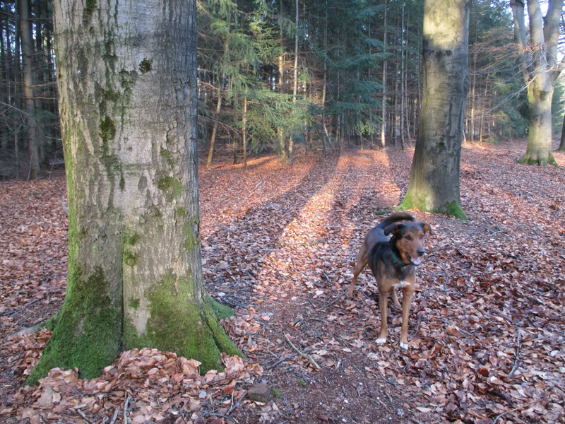 A walk in the woods with Diesel